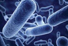 تصویر از اختصاصی بسپار/ پیش بینی بازار افزودنی های ضد میکروب تا سال ۲۰۲۷
